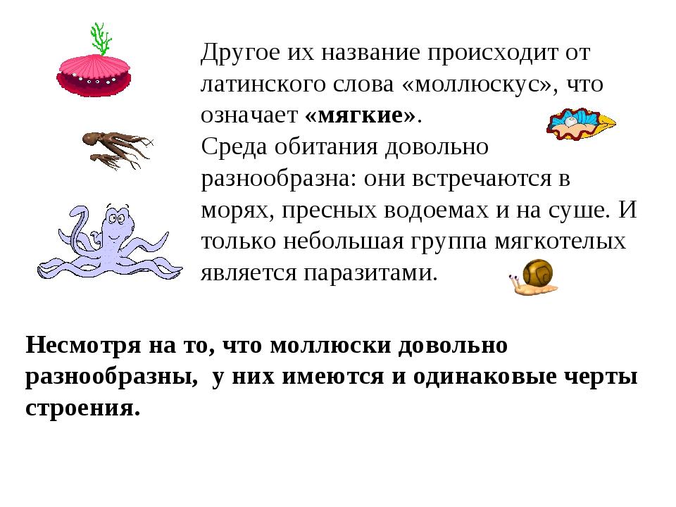 Другое их название происходит от латинского слова «моллюскус», что означает «...