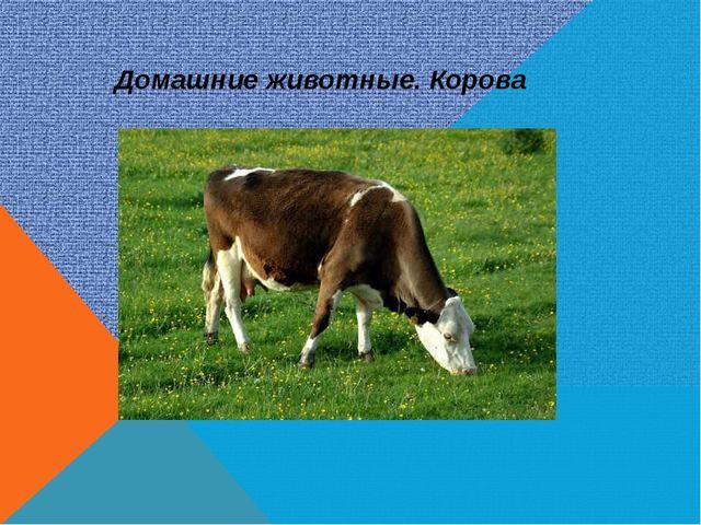 Домашние животные. Корова
