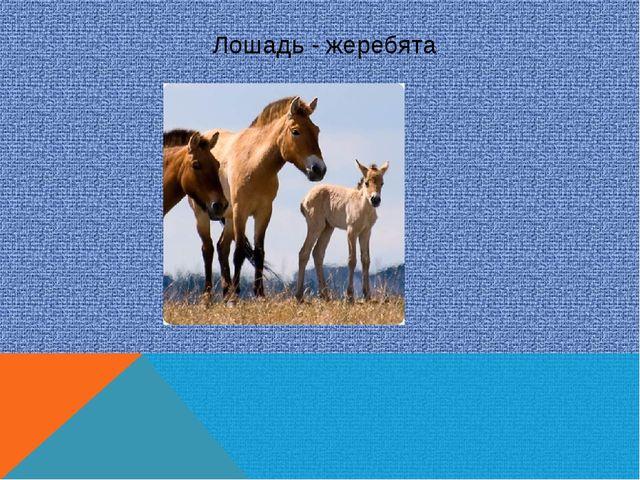 Лошадь - жеребята