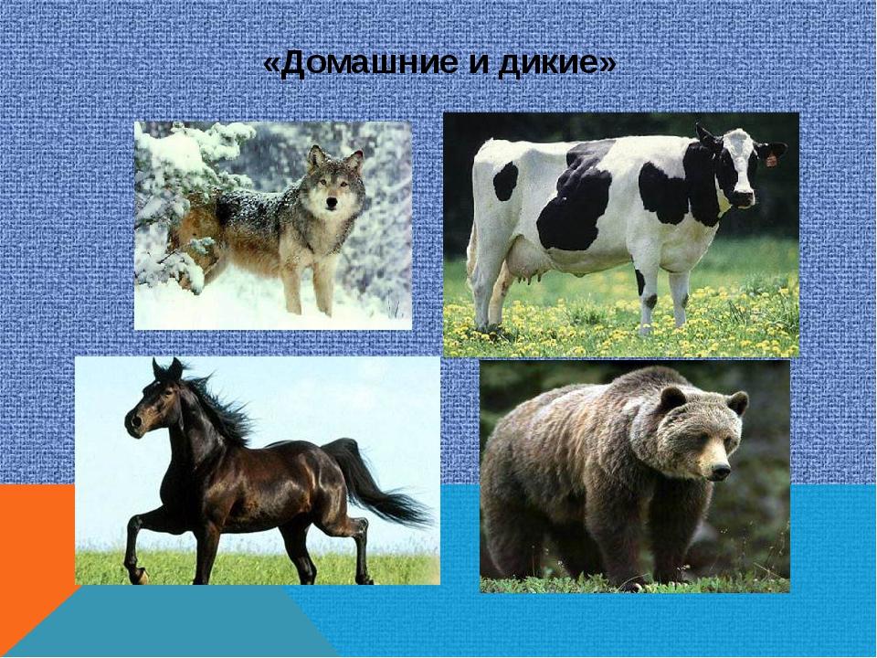 «Домашние и дикие»