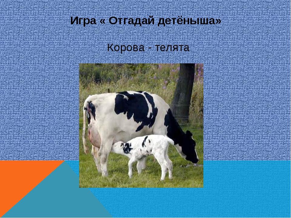 Игра « Отгадай детёныша» Корова - телята