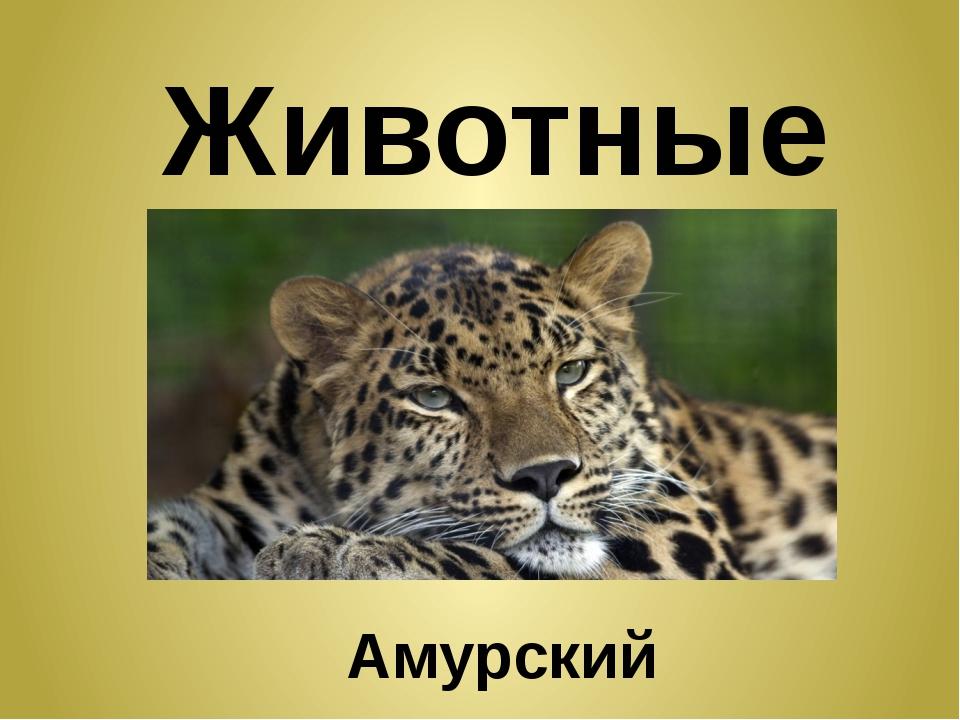 Животные Амурский леопард
