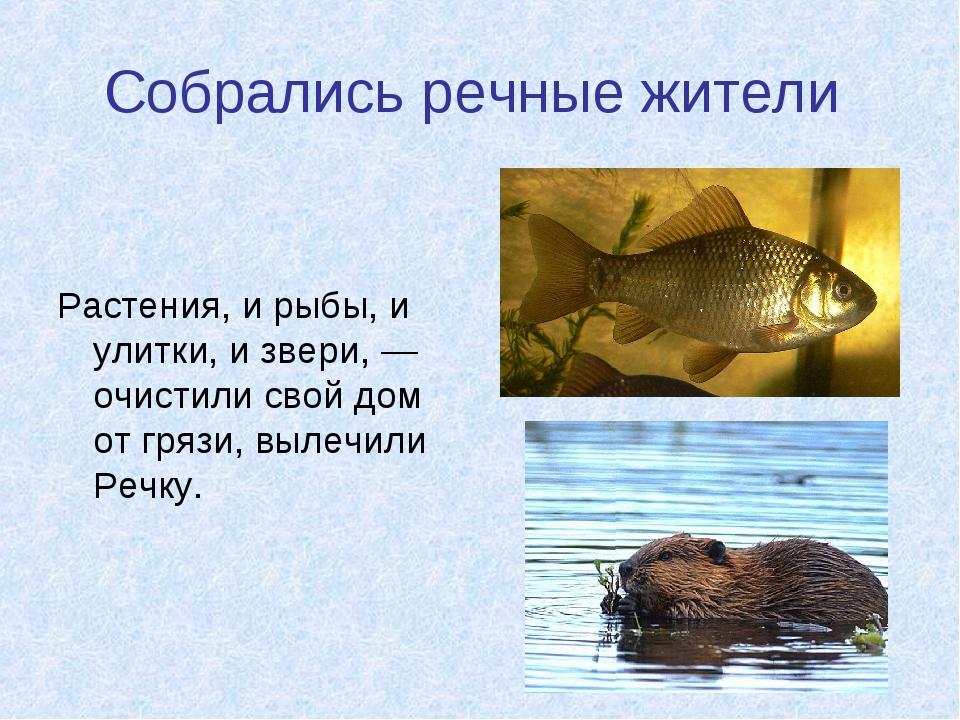 Собрались речные жители Растения, и рыбы, и улитки, и звери, — очистили свой...