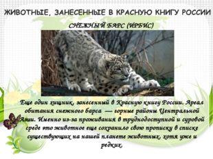 СНЕЖНЫЙ БАРС (ИРБИС) Еще один хищник, занесенный в Красную книгу России. Ареа