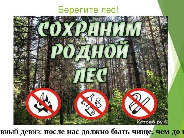 Берегите лес! Главный девиз: после нас должно быть чище, чем до нас!