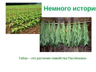 Табак – это растение семейства Паслёновых Немного истории
