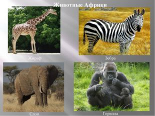 Слон Жираф Зебра Горилла Животные Африки