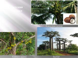 Хлебное дерево Кокосовая пальма Баобаб Растения Африки