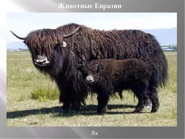 Як Животные Евразии