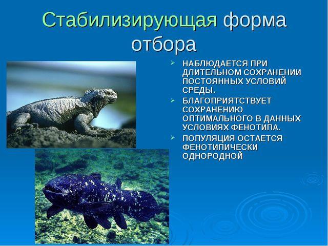 Презентация Движущие Силы Эволюции