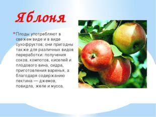 Яблоня Плоды употребляют в свежем виде и в виде сухофруктов; они пригодны так