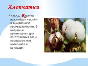 Хлопчатник Хлопок является важнейшим сырьём в текстильной промышленности. В м