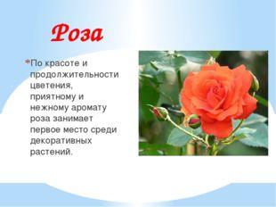 Роза По красоте и продолжительности цветения, приятному и нежному аромату роз