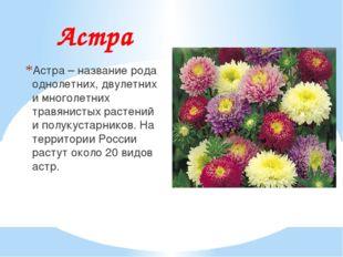Астра Астра – название рода однолетних, двулетних и многолетних травянистых р