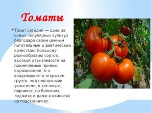 Томаты Томат сегодня — одна из самых популярных культур благодаря своим ценны