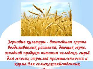 Зерновые культуры - важнейшая группа возделываемых растений, дающих зерно, ос