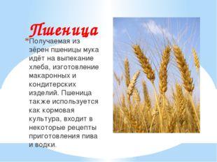 Пшеница Получаемая из зёрен пшеницы мука идёт на выпекание хлеба, изготовлени