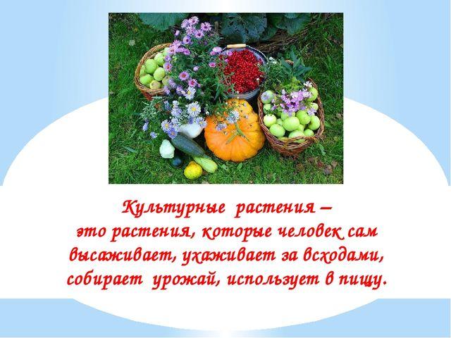 Культурные растения – это растения, которые человек сам высаживает, ухаживает...