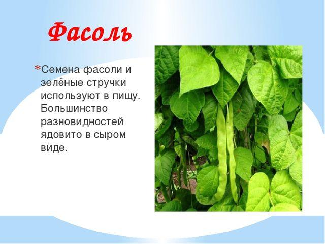 Фасоль Семена фасоли и зелёные стручки используют в пищу. Большинство разнови...