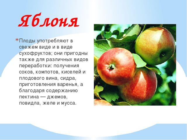 Яблоня Плоды употребляют в свежем виде и в виде сухофруктов; они пригодны так...