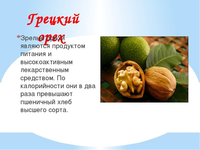 Грецкий орех Зрелые орехи являются продуктом питания и высокоактивным лекарст...