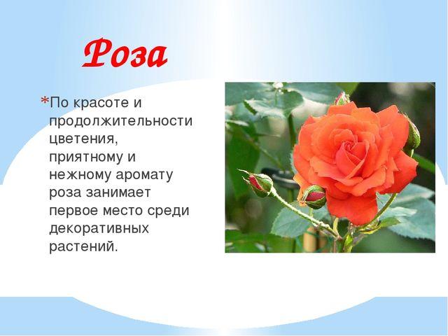Роза По красоте и продолжительности цветения, приятному и нежному аромату роз...