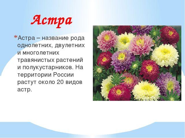 Астра Астра – название рода однолетних, двулетних и многолетних травянистых р...