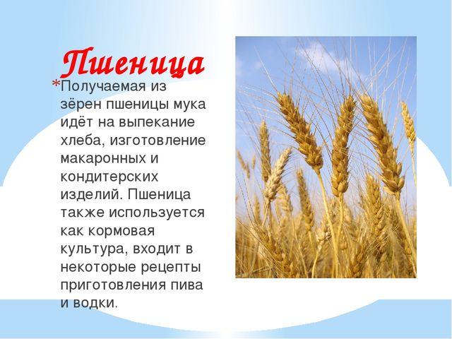 Пшеница Получаемая из зёрен пшеницы мука идёт на выпекание хлеба, изготовлени...