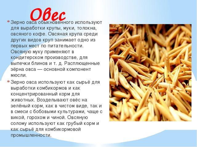 Овес Зерно овса обыкновенного используют для выработки крупы, муки, толокна,...