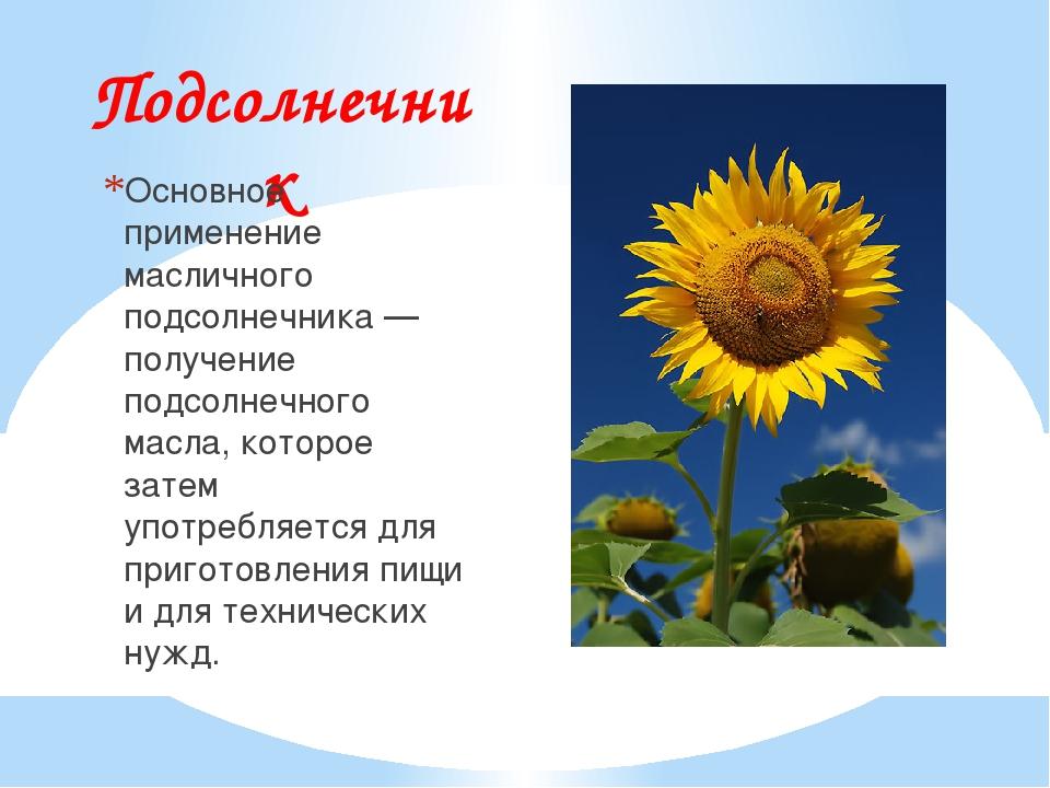 Подсолнечник Основное применение масличного подсолнечника — получение подсолн...