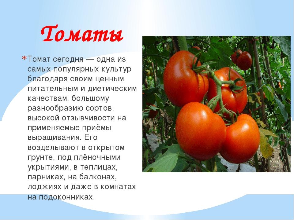 Томаты Томат сегодня — одна из самых популярных культур благодаря своим ценны...