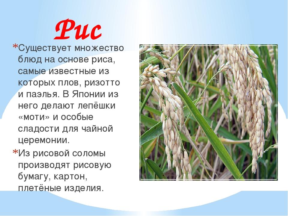 Рис Существует множество блюд на основе риса, самые известные из которых плов...