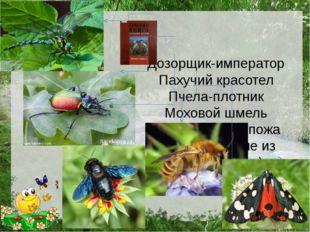 Дозорщик-император Пахучий красотел Пчела-плотник Моховой шмель Медведица-го