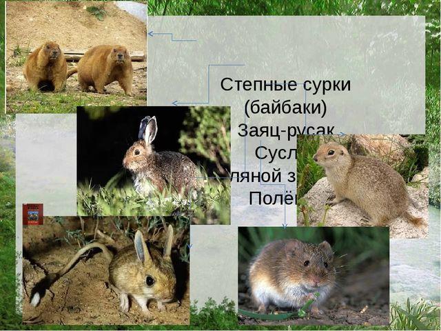 Степные сурки (байбаки) Заяц-русак Суслик Земляной зайчик Полёвка