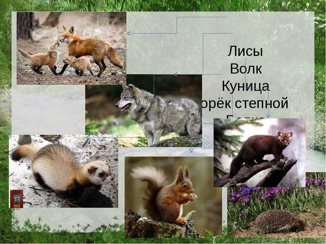Лисы Волк Куница Хорёк степной Белка Ёж
