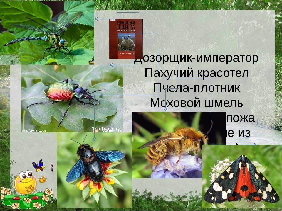 Дозорщик-император Пахучий красотел Пчела-плотник Моховой шмель Медведица-го...