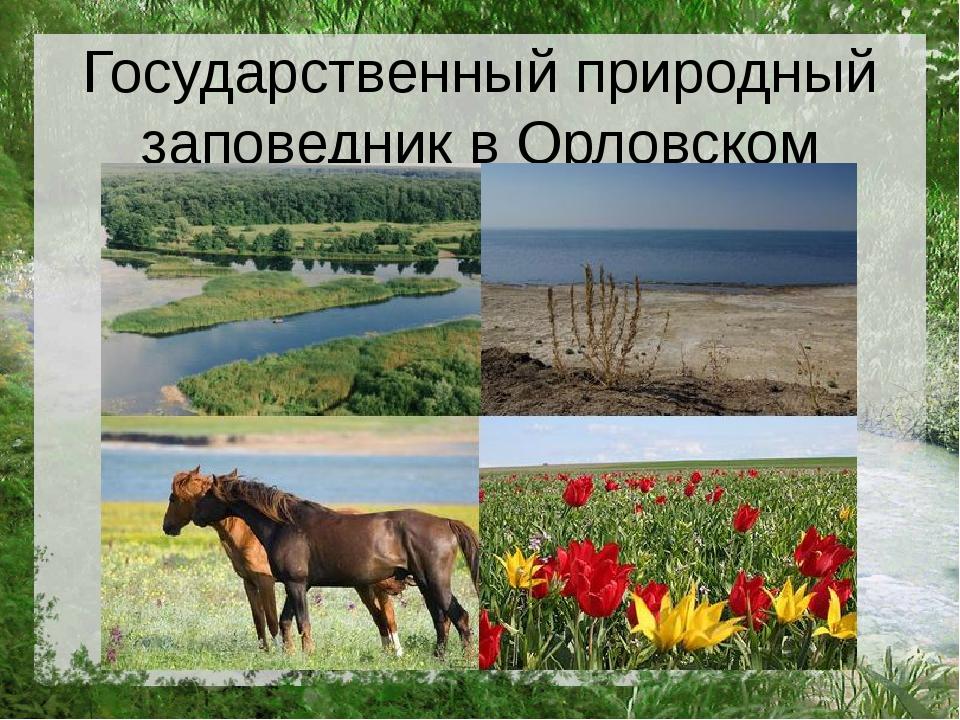 Государственный природный заповедник в Орловском районе
