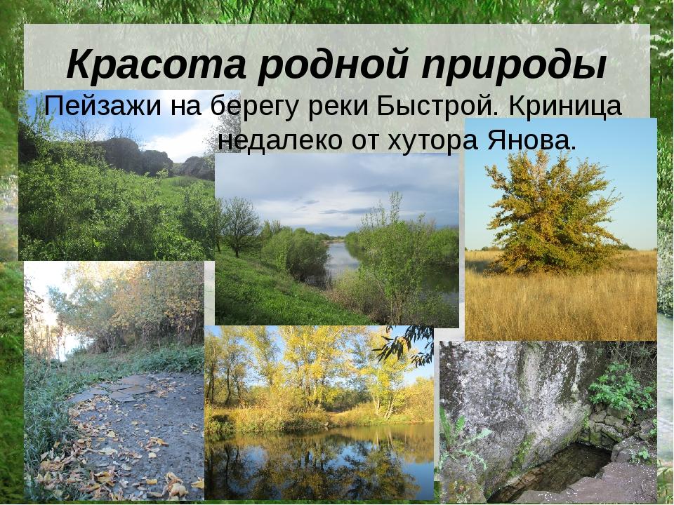 Красота родной природы Пейзажи на берегу реки Быстрой. Криница недалеко от ху...