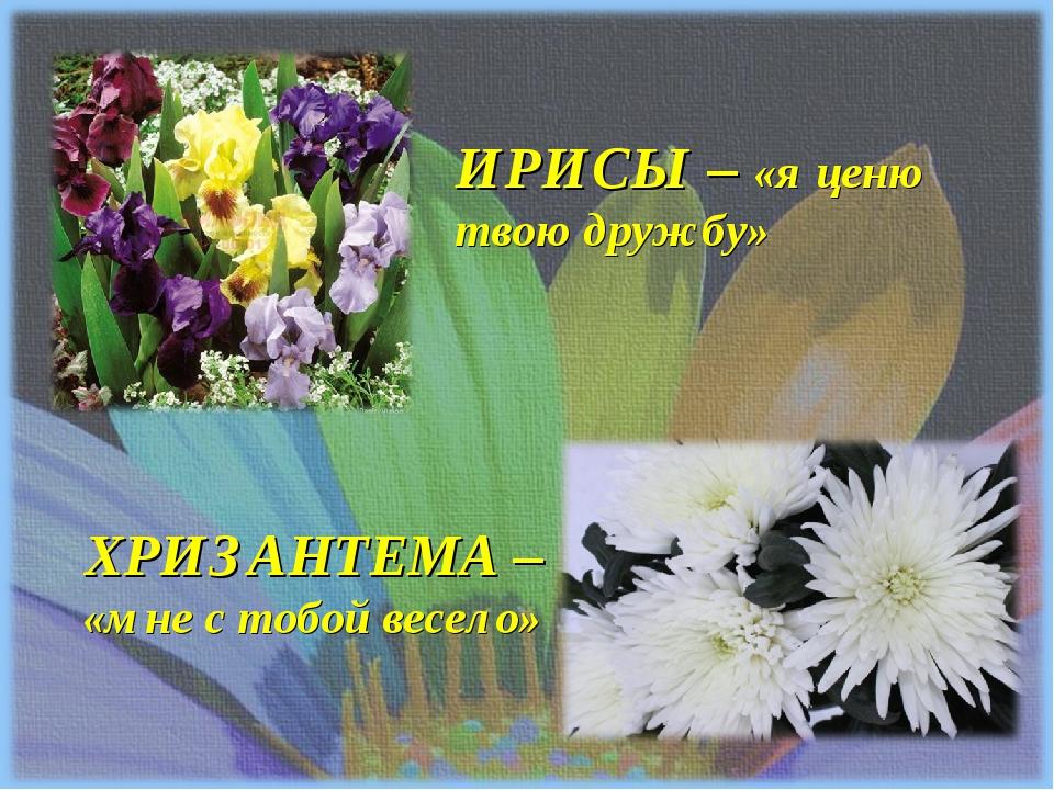ИРИСЫ – «я ценю твою дружбу» ХРИЗАНТЕМА – «мне с тобой весело»