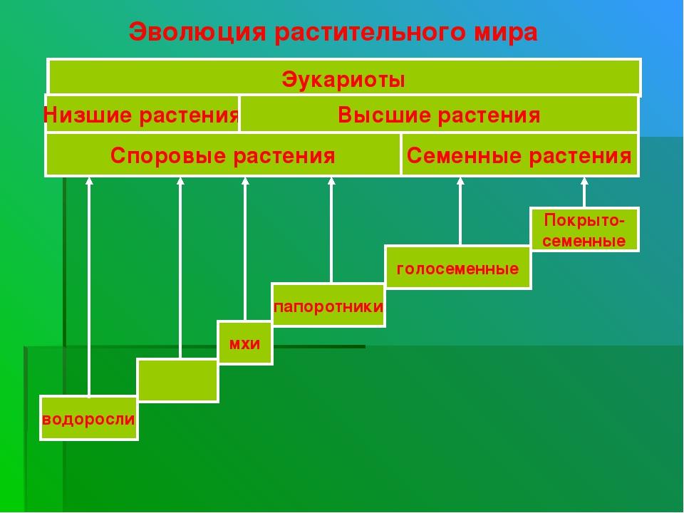 Эволюция растительного мира папоротники мхи голосеменные Покрыто- семенные во...