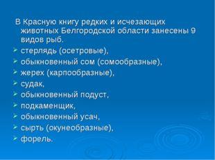 В Красную книгу редких и исчезающих животных Белгородской области занесены 9