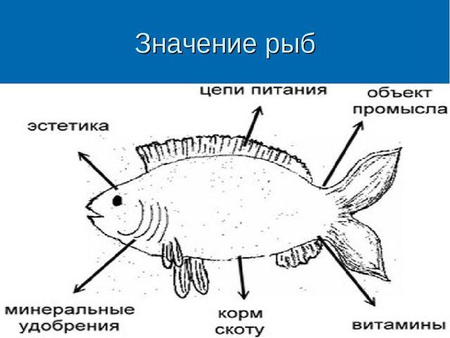 Значение рыб