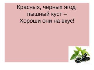 Красных, черных ягод пышный куст – Хороши они на вкус!
