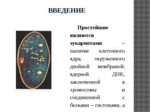 ВВЕДЕНИЕ Простейшие являются эукариотами – наличие клеточного ядра, окруженно