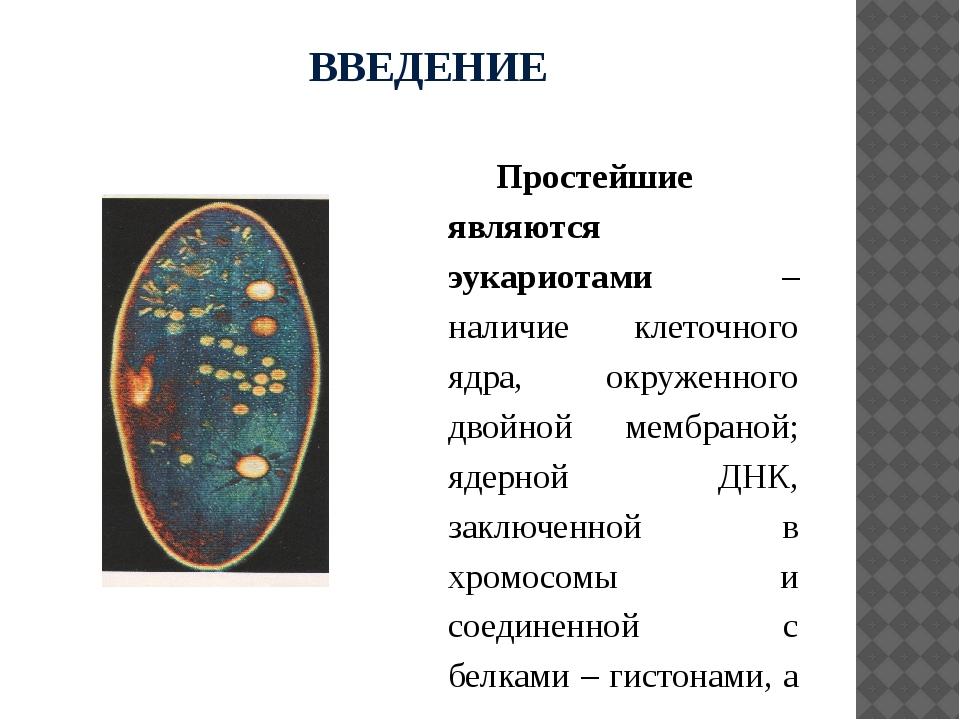 ВВЕДЕНИЕ Простейшие являются эукариотами – наличие клеточного ядра, окруженно...