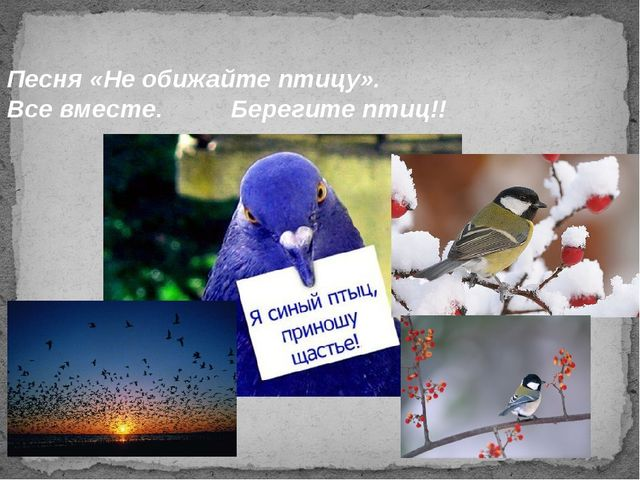 Песня «Не обижайте птицу». Все вместе. Берегите птиц!!