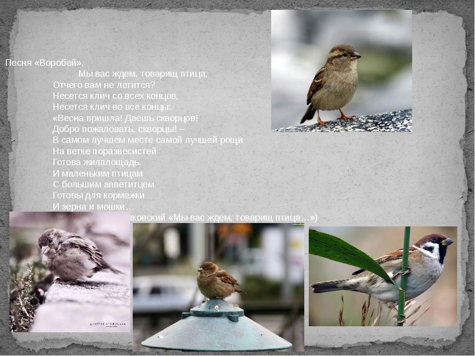 Песня «Воробей».  Мы вас ждем, товарищ птица, Отчего вам не летится? Нес...