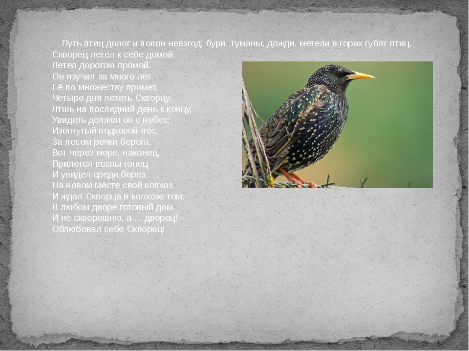 Путь птиц долог и полон невзгод: бури, туманы, дожди, метели в горах губят п...