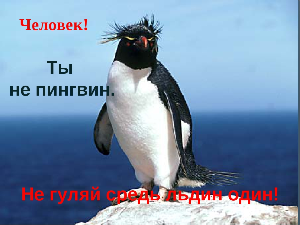 Ты не пингвин. Человек! Не гуляй средь льдин один!