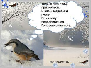 - Только я из птиц, признаться, В зной, морозы и пургу По стволу передвига